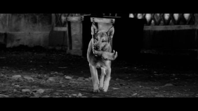 Dog Yojimbo