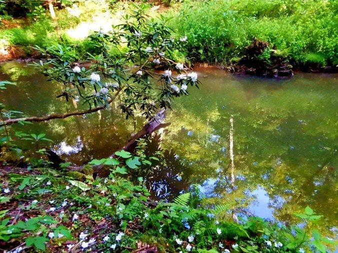 i walketh by the still waters3177173929909700838..jpg